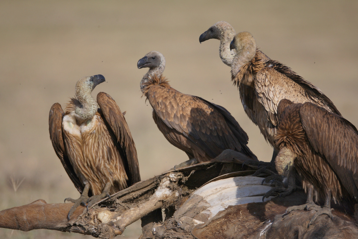 Border patrol radio tower under siege from 300 vultures, which are covering it in feces and urine