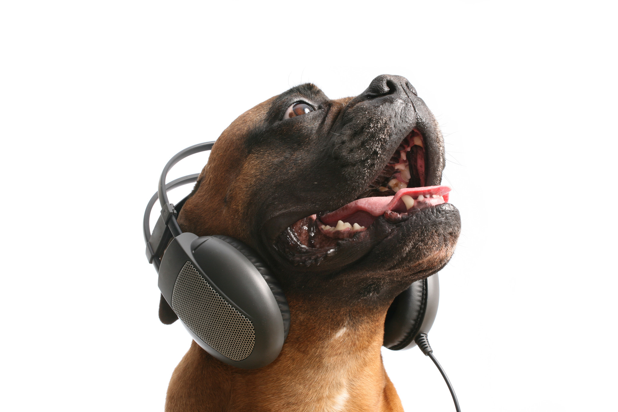 Spotify launches playlists for your pets so you can give your furbaby a personalized mix