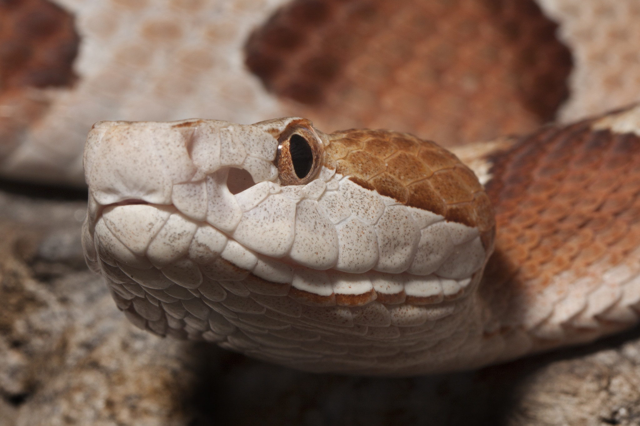 Mississippi hunter attacked from above by venomous snake hidden in tree