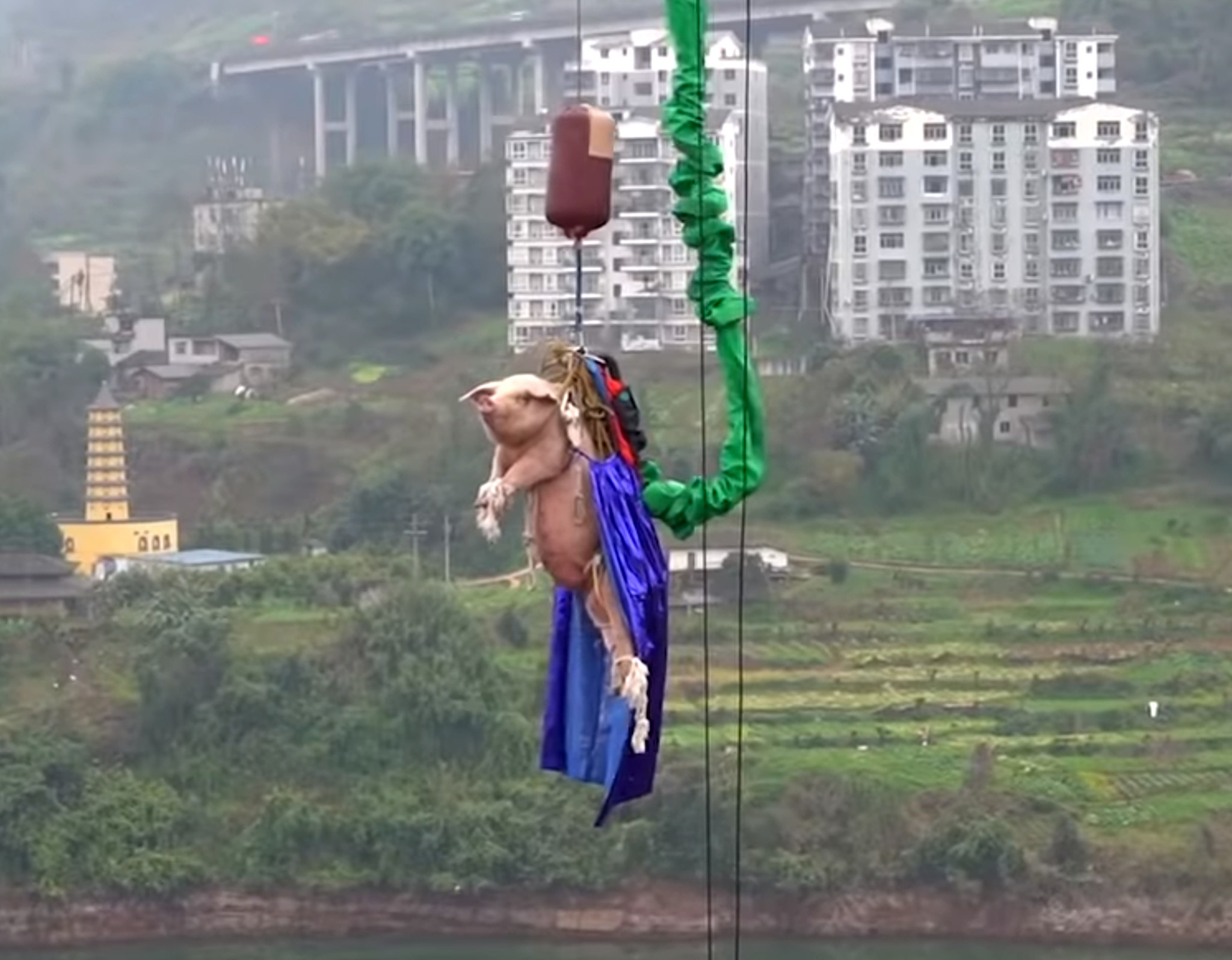 Chinese theme park slammed for forcing pig to bungee jump off massive tower