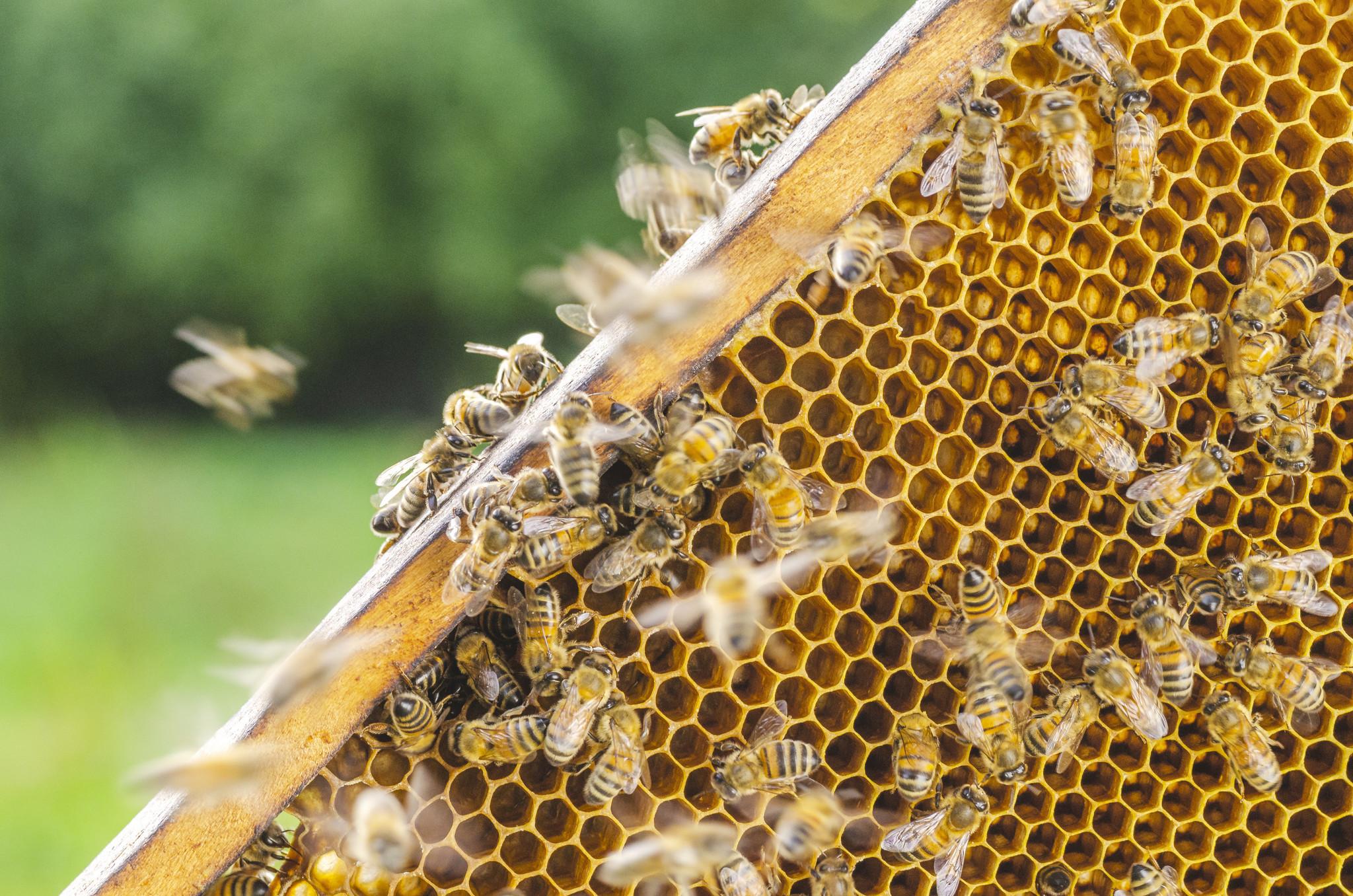 California bee bandit pulls off 92-hive heist