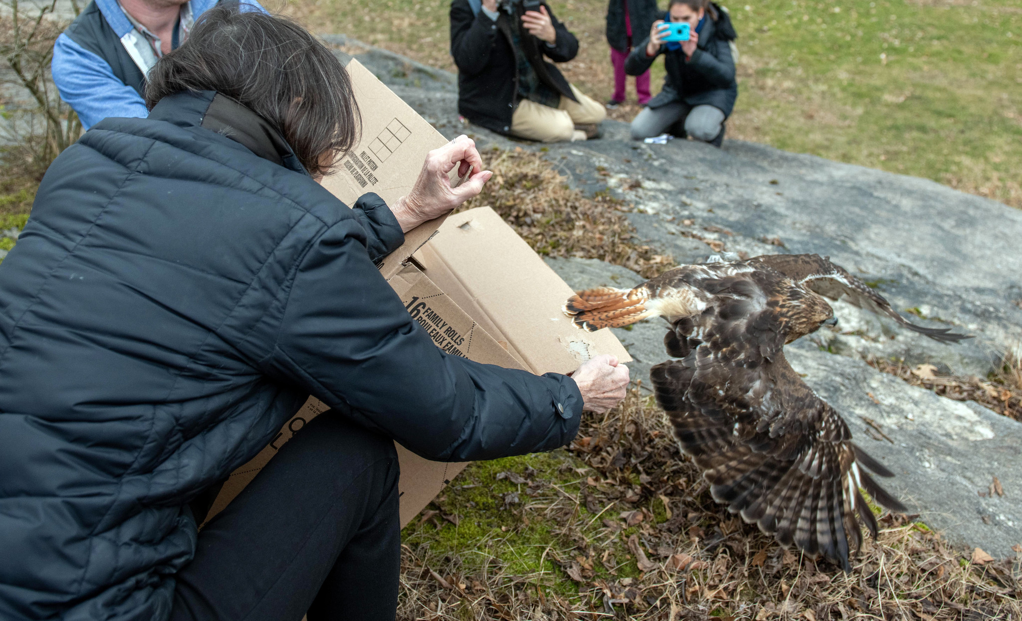 'Blair' the hawk released into Central Park after being saved following scary Brooklyn crash