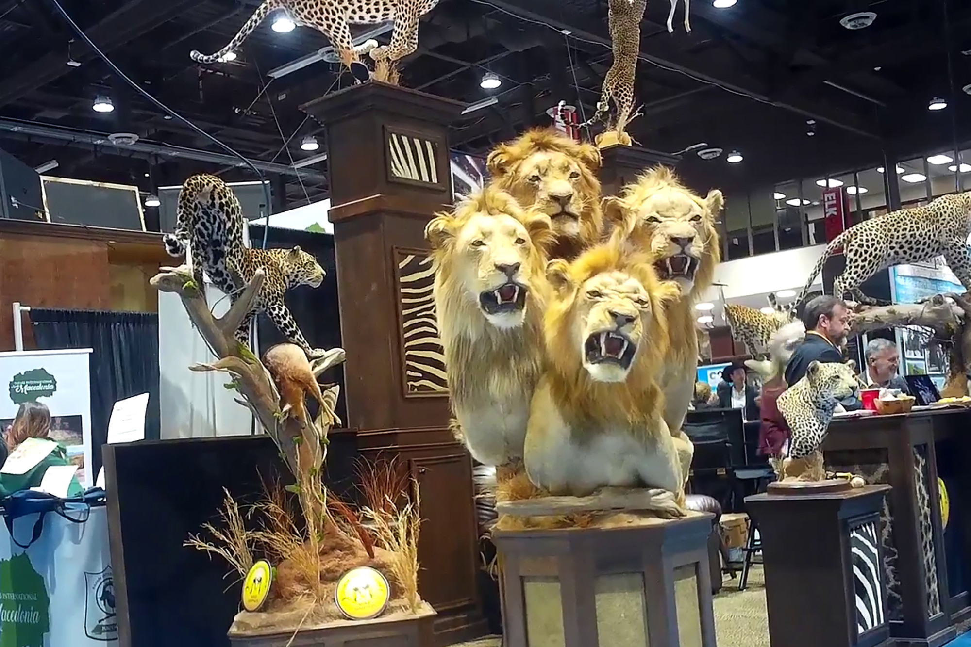 Canned lion hunts and $1,300 giraffe-skin boots all up for sale at trophy-hunting convention