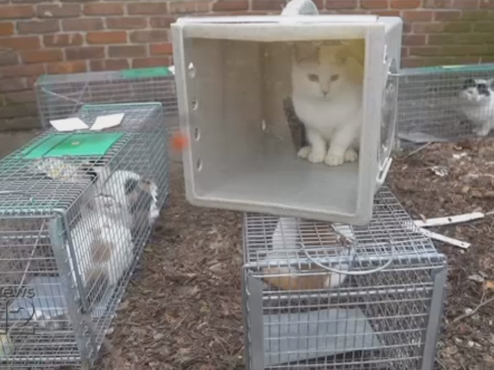 Dozen cats rescued from Long Island house of horrors littered with garbage, human feces: officials