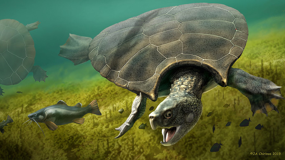 Car-sized turtles used to hog the highways