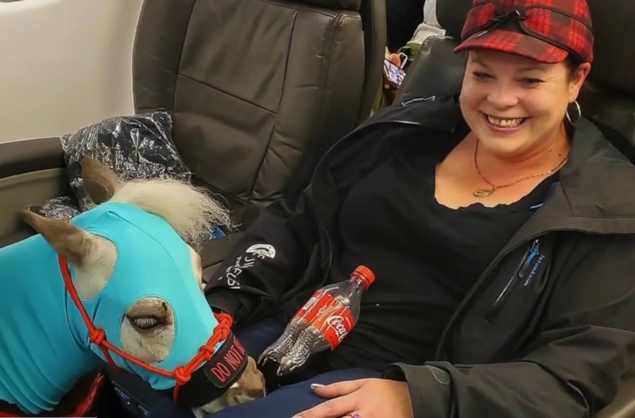 Mini horse takes flight as handler hopes service animals can continue to travel on planes