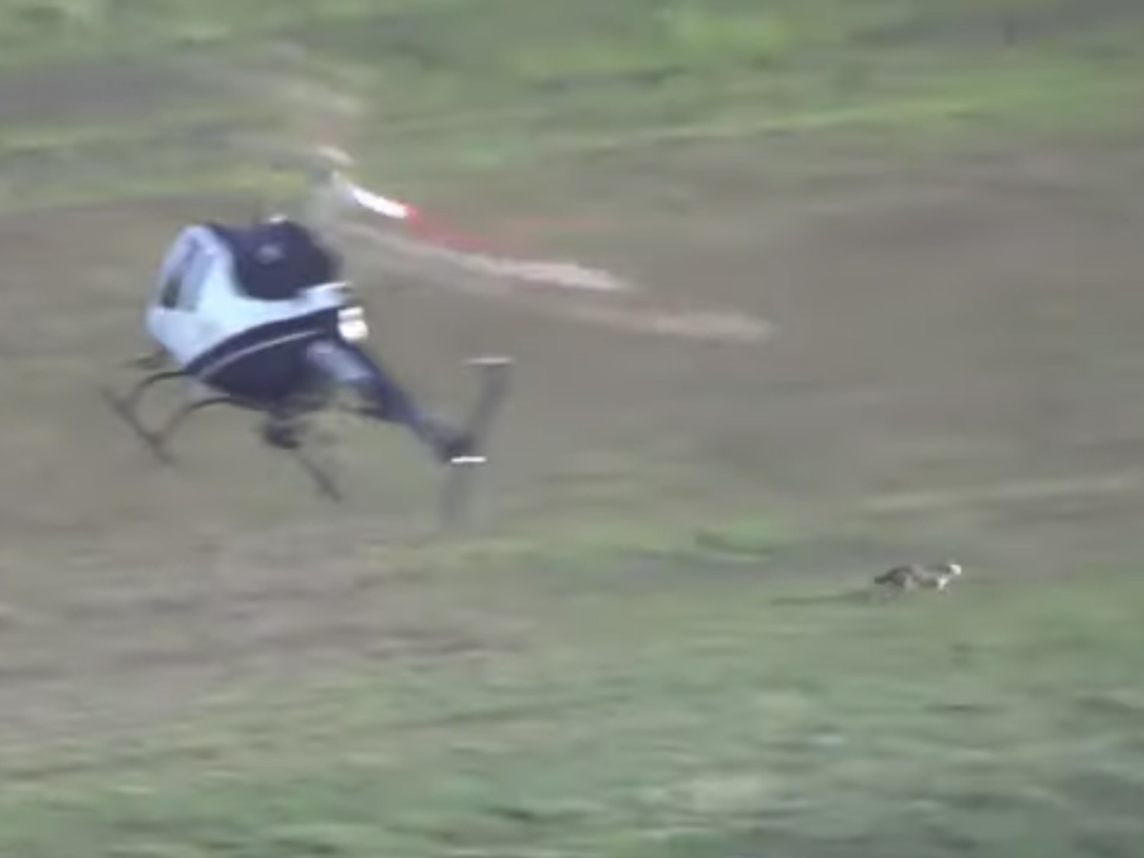 SEE IT: Coyote leads police helicopter on wild chase after running around California airfield