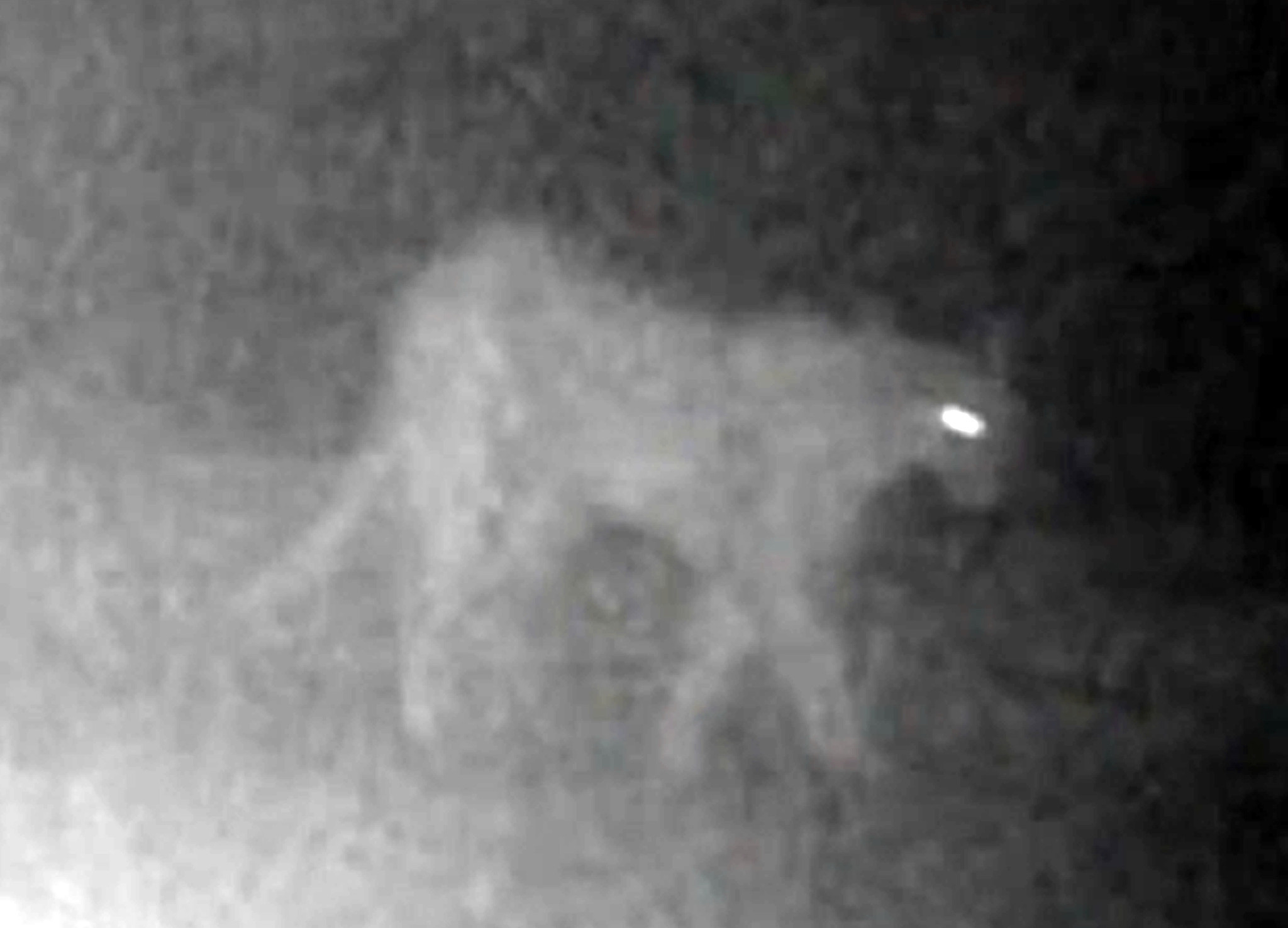 Mountain lion involved in attack on California 6-year-old captured and euthanized, officials say