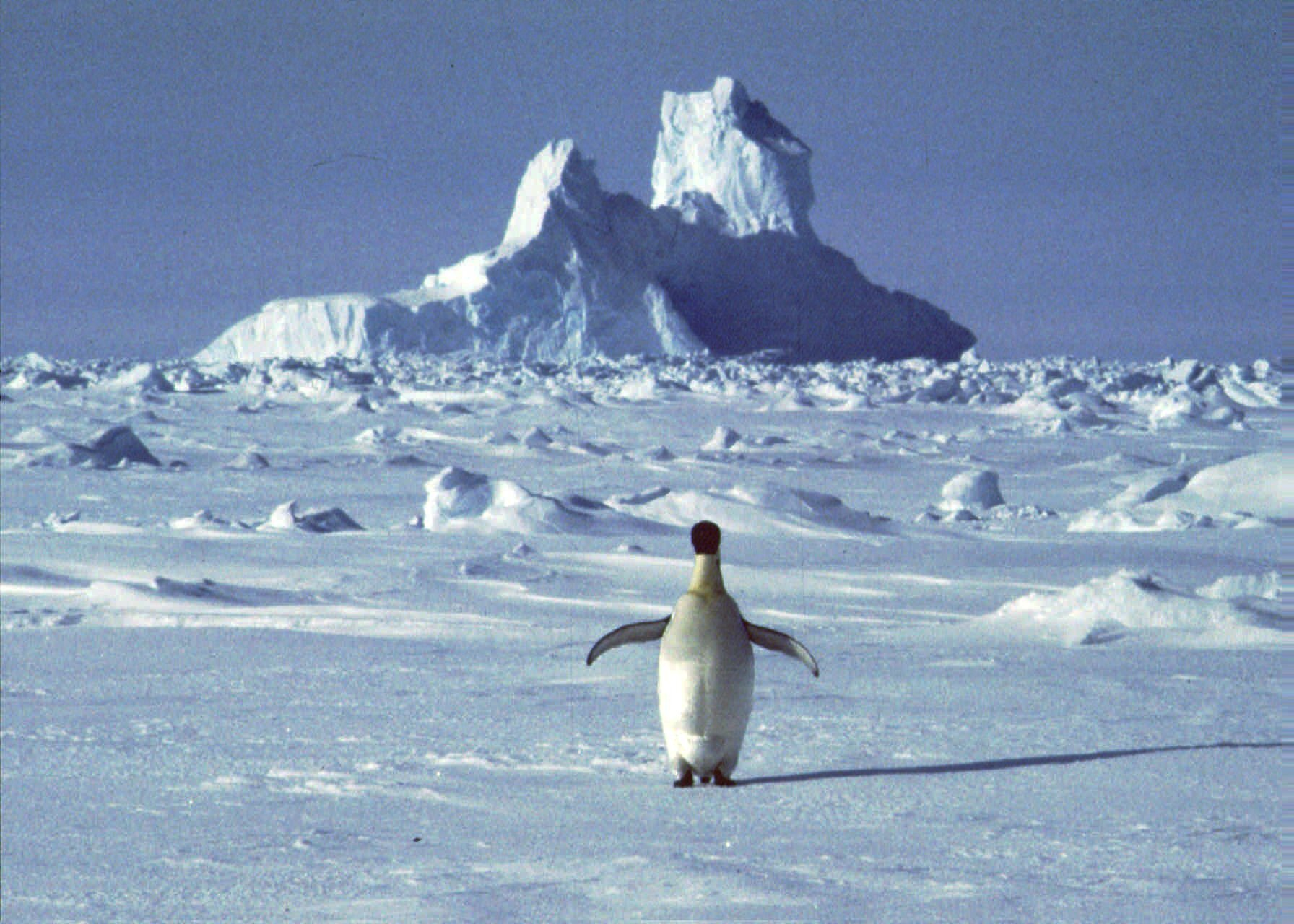 Greenland and Antarctica ice melting 6 times faster than they were in the '90s