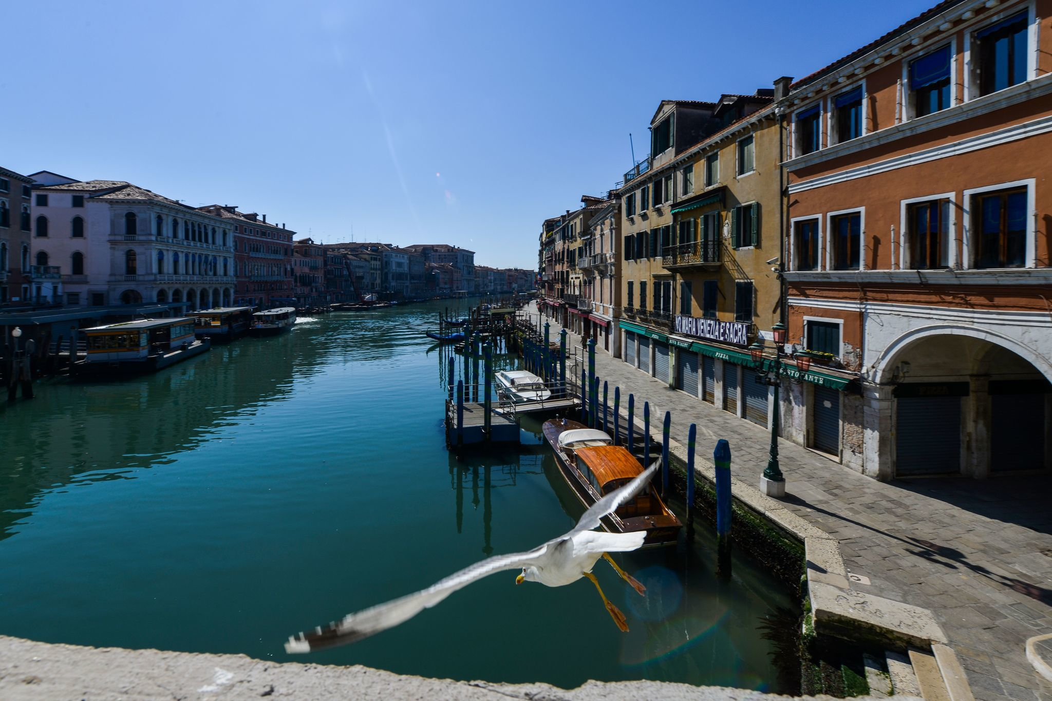 Dolphins abound in Venice canals amid Italy's nationwide lockdown