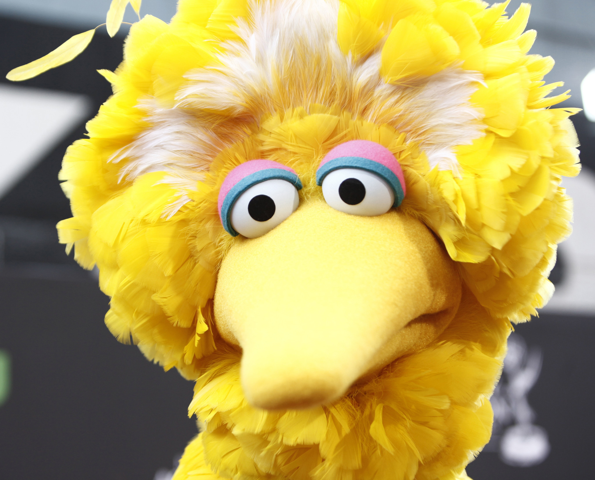 SEE IT: Big Bird hits the streets to celebrate St. Patrick's Day in Ireland