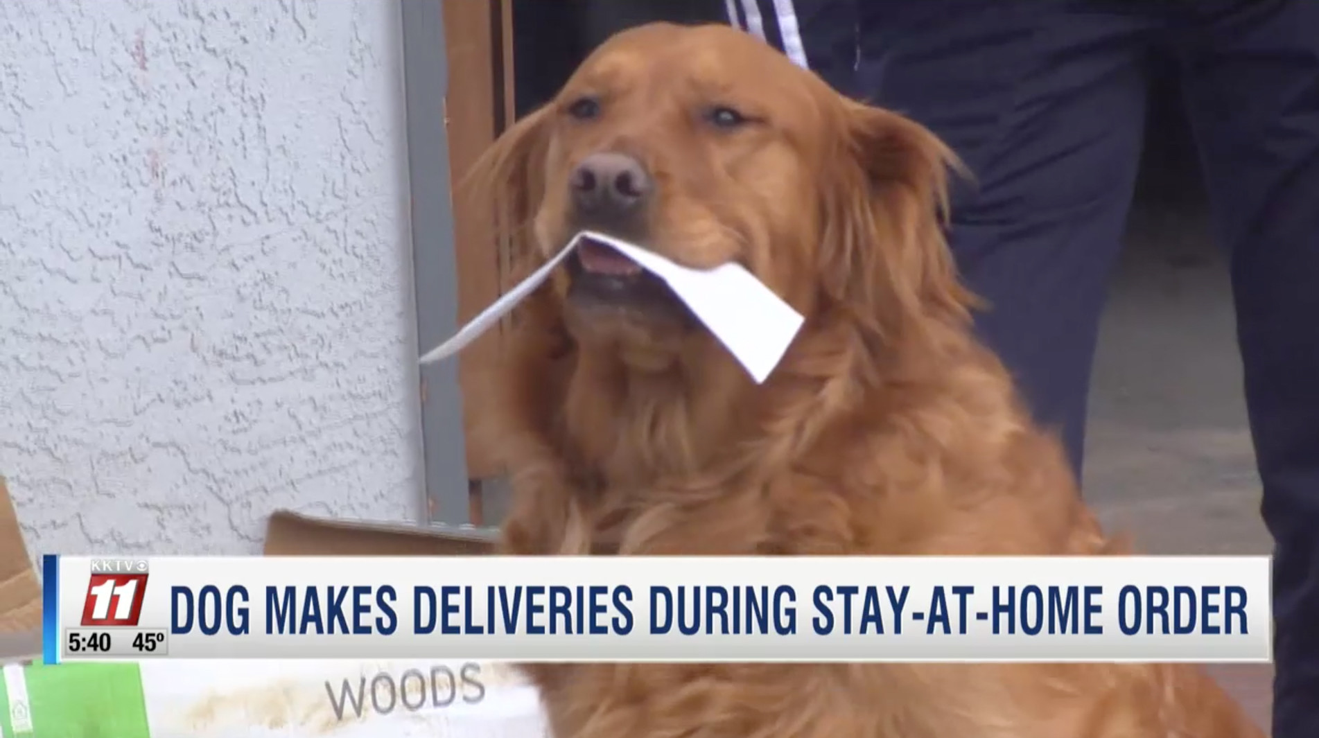SEE IT: Dog is delivering groceries to quarantined neighbor with health problems during coronavirus pandemic