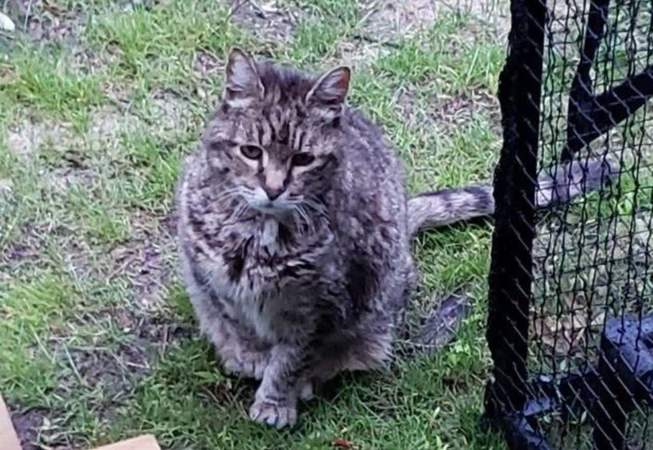 Long Island family's cat found beaten, decapitated