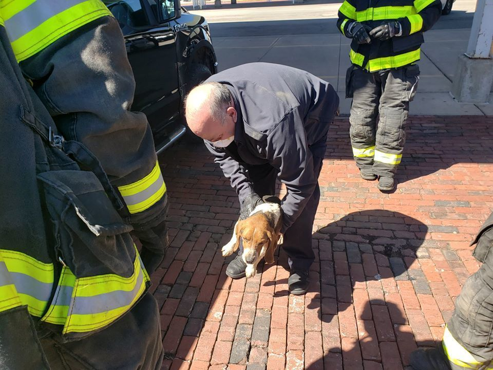 Beagle gets stuck under owner's car, rescued in Rochester after traveling more than 40 miles: authorities